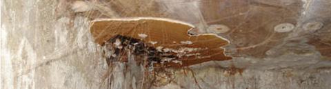 La loi alur de lutte contre les mérules